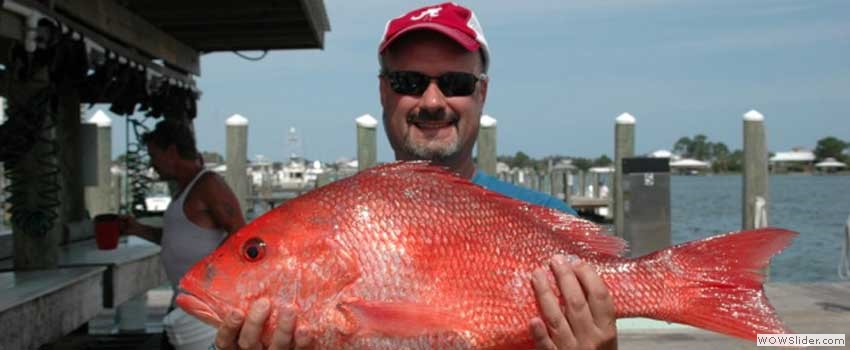 What types of fish can you catch in the gulf mexico all for Deep sea fishing gulf of mexico